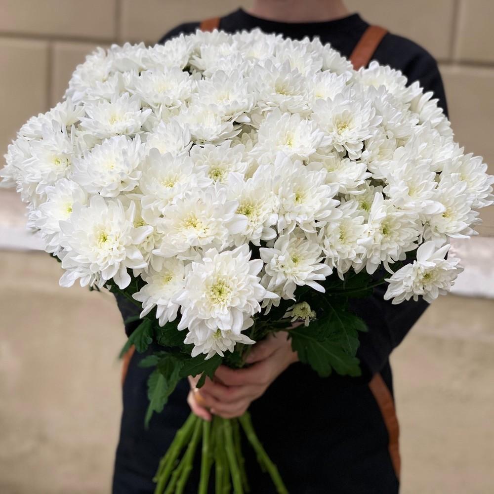 Хризантема кустовая белая 150 руб./шт