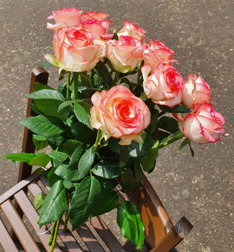 Розы Джумилия букет из 11 шт.