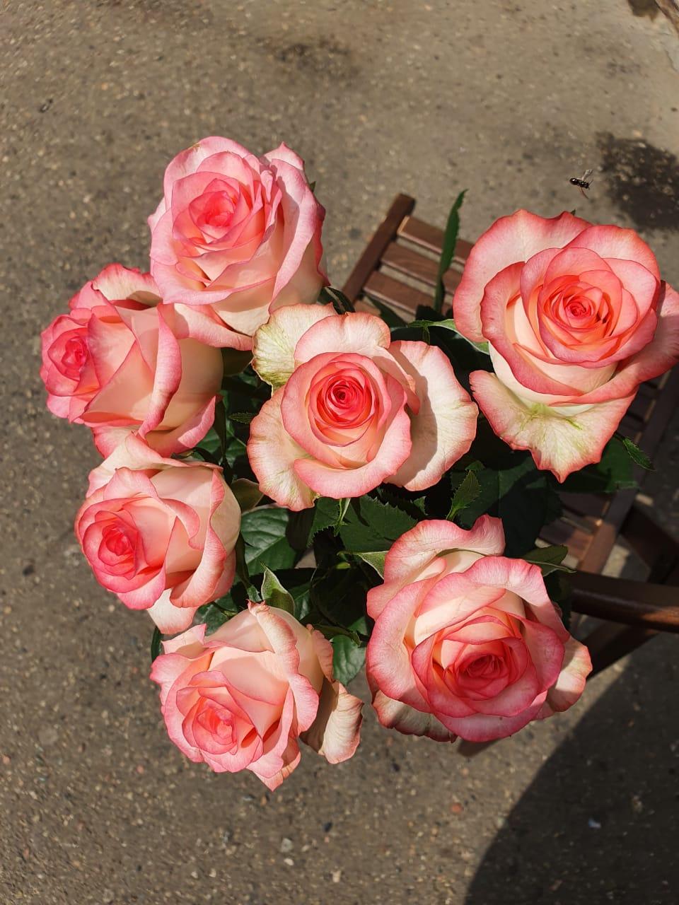 Розы Джумилия букет из 7 шт.
