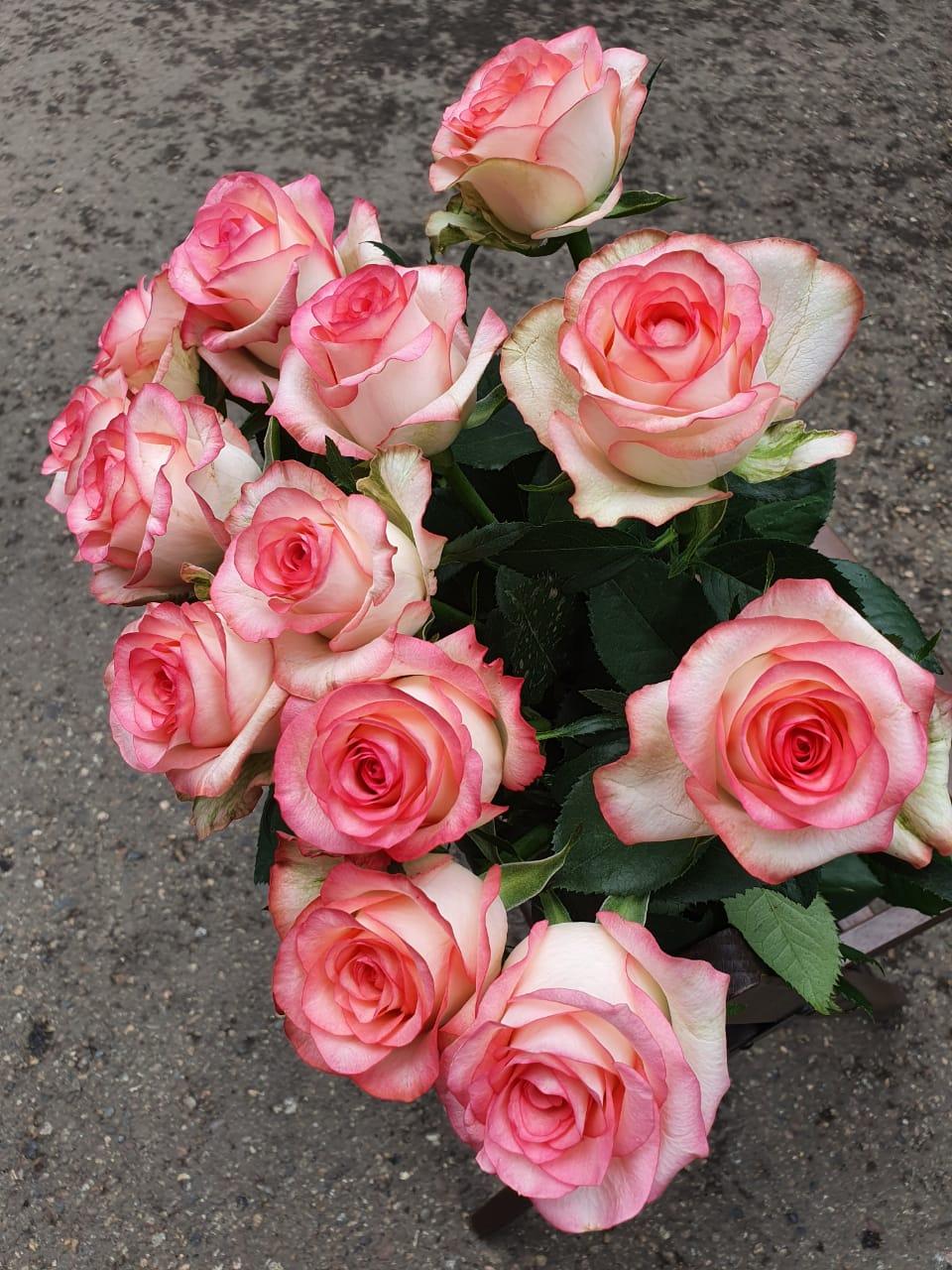 Розы Джумилия букет из 13 шт.