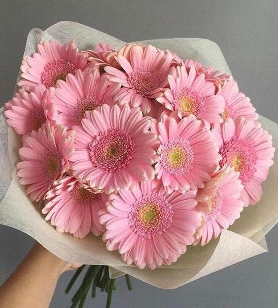 Нежный букет из розовых гербер 17 шт.
